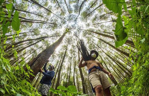 'Harmoni Hutan Pinus Candipuro' Jawara Lomba Foto Petrogas